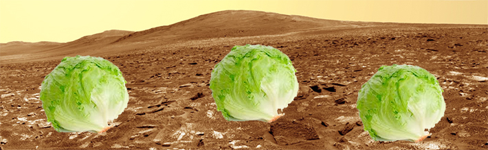 southampton students lettuce on mars