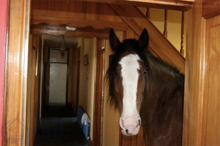 Terrible real estate horse in house